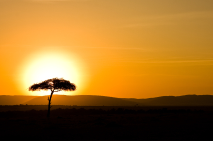 tree at sunrise in South Africa