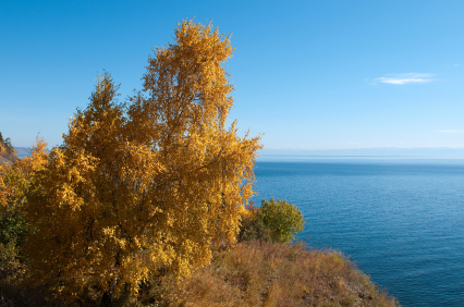 golden tree on Lake Baikal, Russia