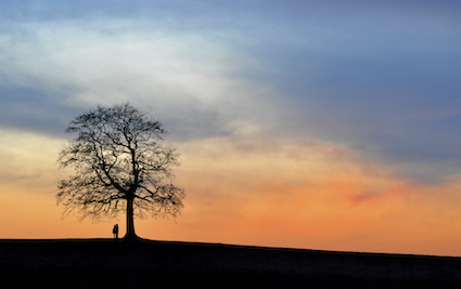 two people silhouetted by a tree at dusk