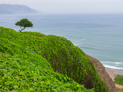 lone tree on a hillside overlooking the ocean