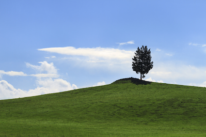 lonely tree on a green hilltop under a blue sky