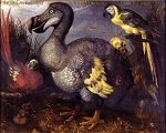 18th century painting of a dodo by Roelant Savery [Public domain], via Wikimedia Commons
